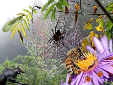 Les insectes utiles aux jardin et au jardinier - Insectes nuisibles du jardin ...