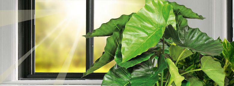 lumi re pour les plantes vertes. Black Bedroom Furniture Sets. Home Design Ideas