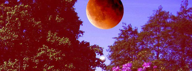 Lune rouse au jardin for Jardin lune