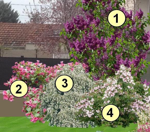 Massif de fleurs pinterest 39 te y ll k i ekler fleur for Fleurs dans un jardin