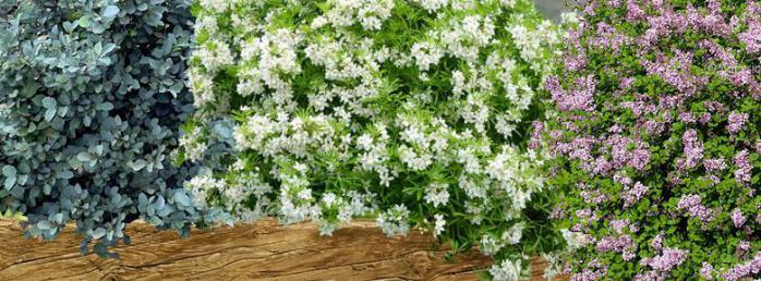 Massif d arbustes pour un petit jardin for Petit portillon pour jardin