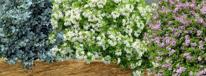 Massif d arbustes pour un petit jardin for Arbuste de jardin