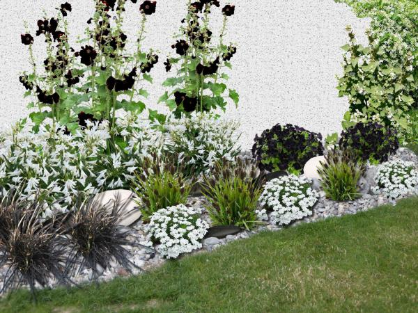 Cr er un massif de fleurs blanches et noires for Fleurs blanches vivaces