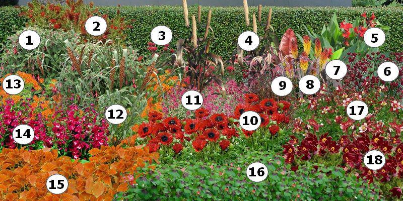 Plan de massif de fleurs rouges