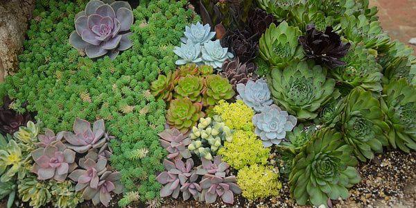 Créer un jardin de plantes grasses: jardin de succulentes