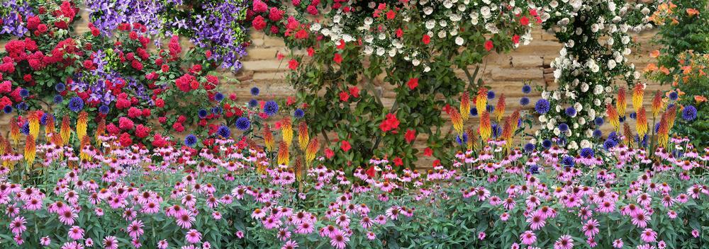 comment fleurir un mur ensoleill au sud dans le jardin. Black Bedroom Furniture Sets. Home Design Ideas