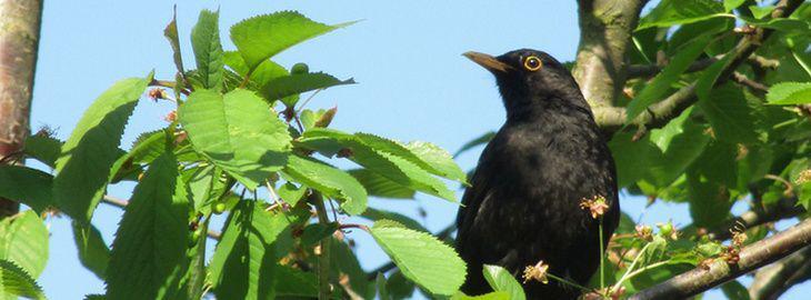 Cr er un jardin refuge pour les oiseaux - Faire fuir les oiseaux dans un jardin ...