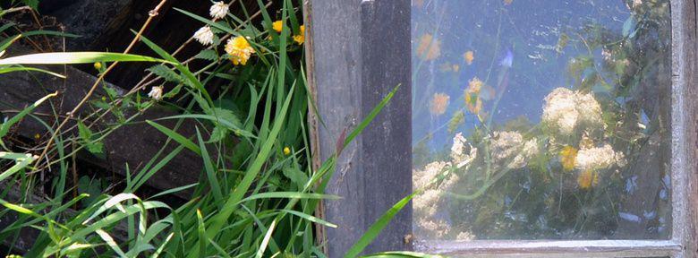Installer des miroirs au jardin for Maladie du miroir