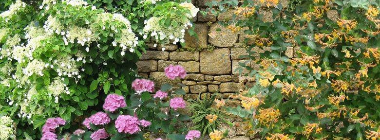Comment fleurir un mur au nord for Jardin expose nord
