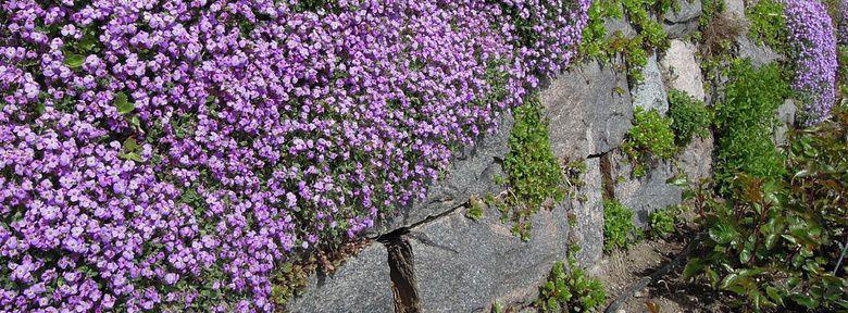 Muret en pierres s ches muret de pierres s ches fleuri - Construire un muret en pierre ...