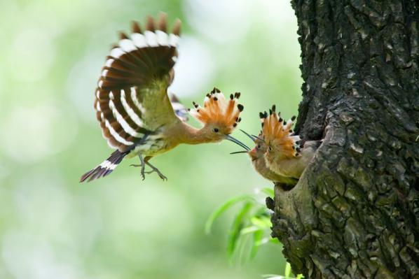 Cr er un jardin refuge pour les oiseaux - Comment faire fuir les oiseaux ...