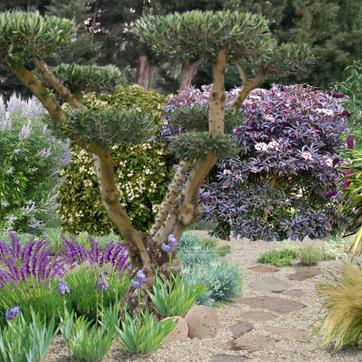 L\'art du niwaki ; comment tailler les arbres et arbustes en nuage.