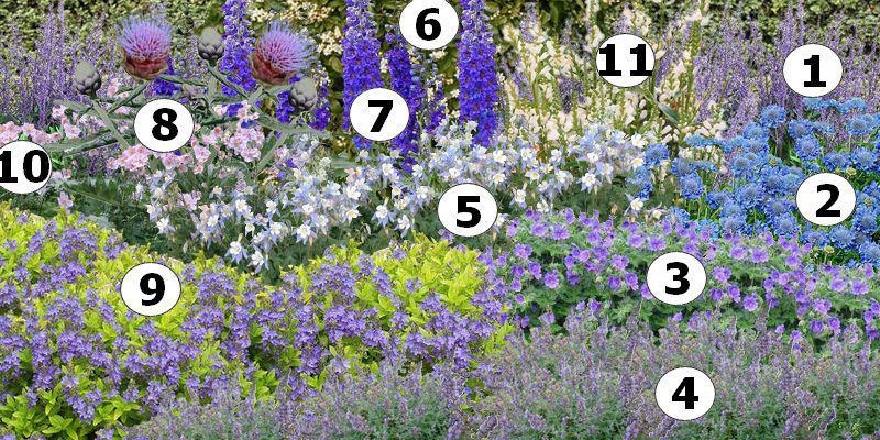 cr er un massif de fleurs bleues plan de massif bleu. Black Bedroom Furniture Sets. Home Design Ideas