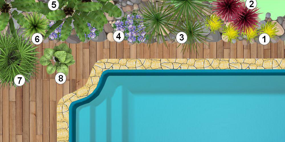 crer un massif de plantes exotiques autour dune piscine