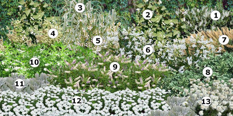 créer un massif de fleurs blanches