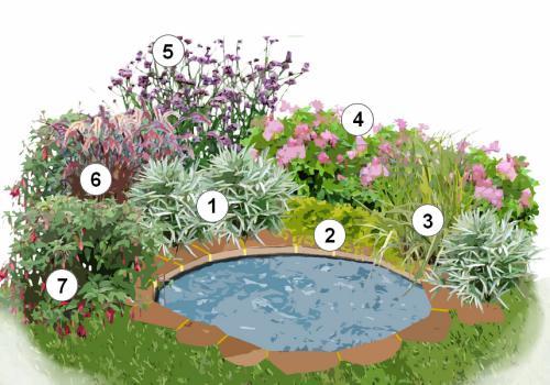 Massifs autour de bassins de jardin :