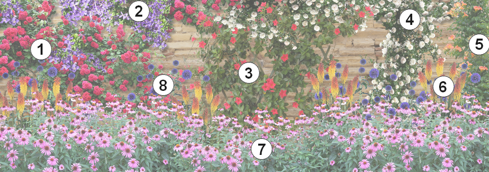 Comment fleurir un mur ensoleill au sud dans le jardin - Comment fixer un rosier grimpant au mur ...
