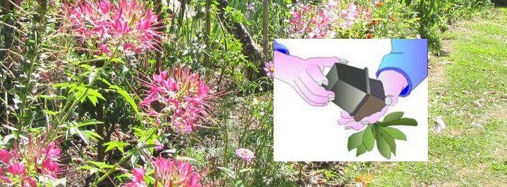 comment planter les fleurs annuelles