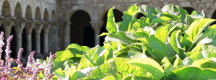 créer un jardins des herbes médicinales ou simples: Jardin médiéval