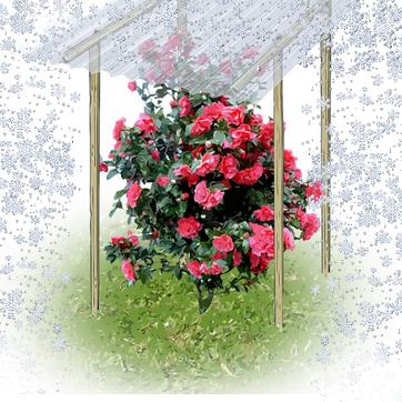 Protection des plantes en hiver for Plante en hiver