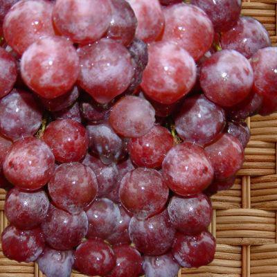 La Vigne Espece Et Culture Taille De La Vigne Raisin De Table