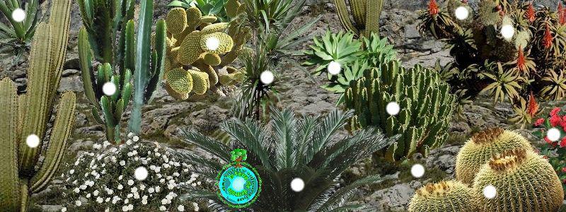 creer une rocaille: rocaille de fleurs: rocaille plantes vivaces