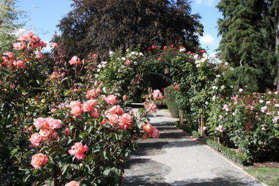 cr er une roseraie un jardin de rose. Black Bedroom Furniture Sets. Home Design Ideas