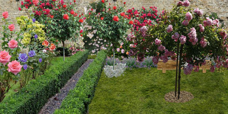 planter une roseraie