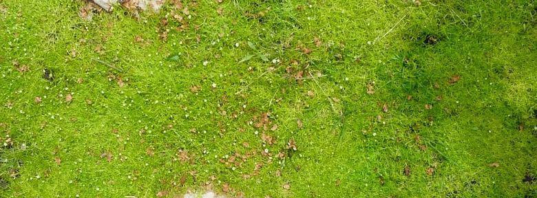 Sagine un gazon doux comme la mousse for Tarif creation gazon