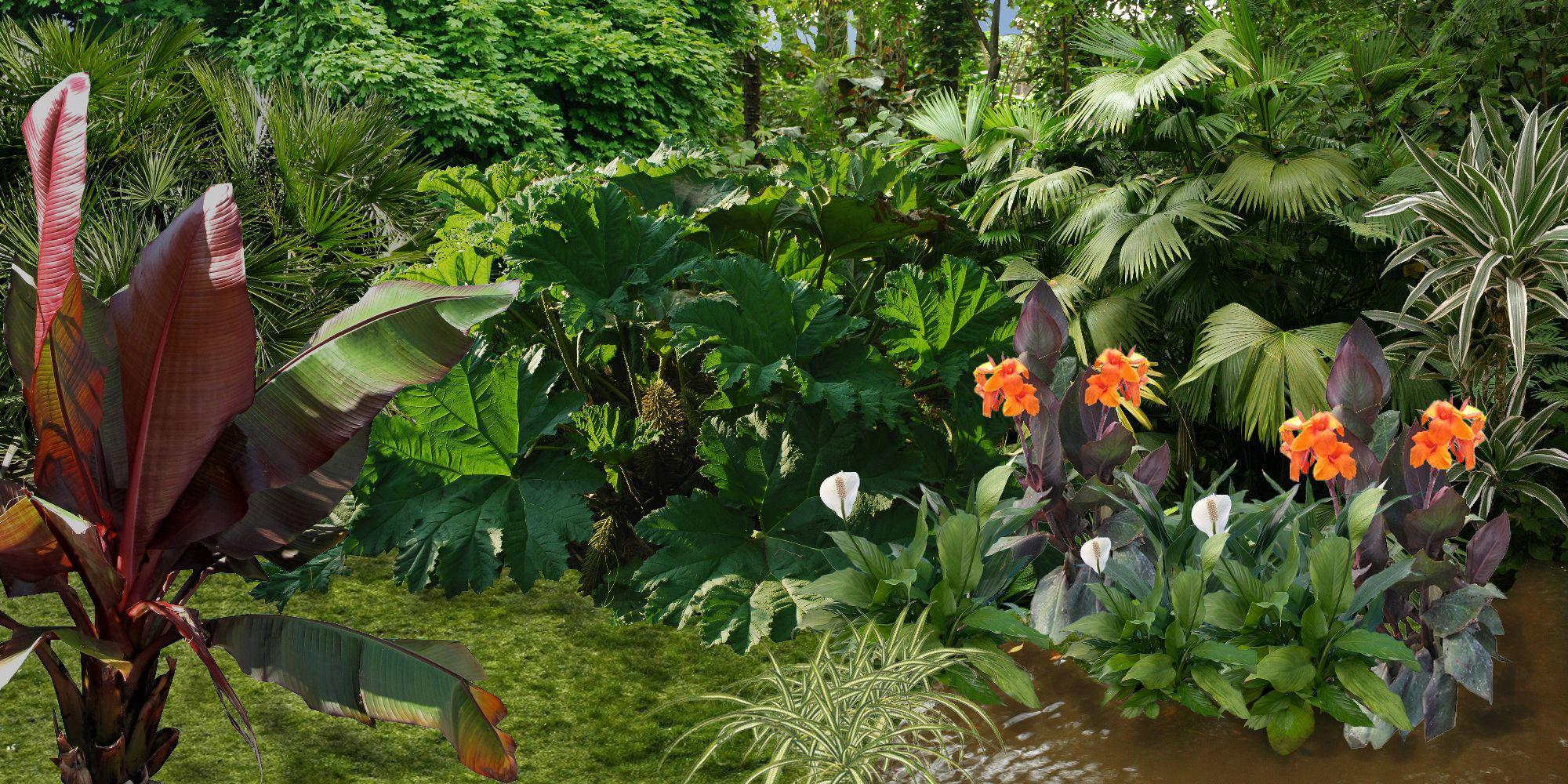 créer un jardin exotique: plan de jardin exotique