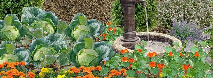 Creer Un Potager Biologique Decoratif Un Potager Fleuri