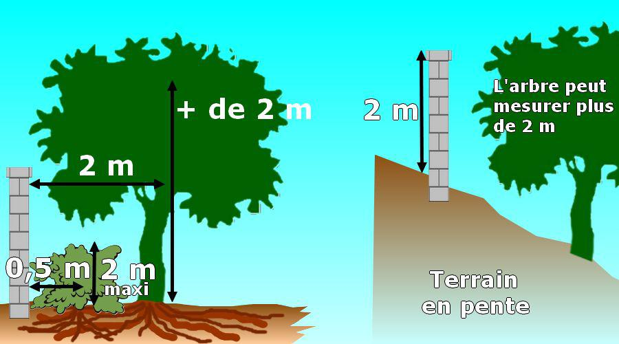 Distances l gales de plantation des arbres et des haies - Article 673 du code civil ...