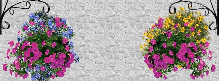 Faire Ses Suspensions De Fleurs D Ete