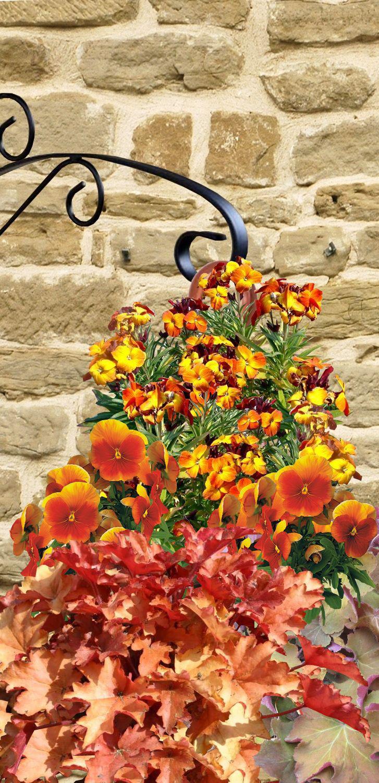 suspensions et jardini res d 39 hiver fleuries. Black Bedroom Furniture Sets. Home Design Ideas