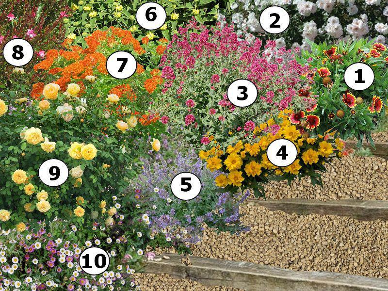 plantes fleuries plein soleil interesting massifs de fleurs rsistantes with plantes fleuries. Black Bedroom Furniture Sets. Home Design Ideas