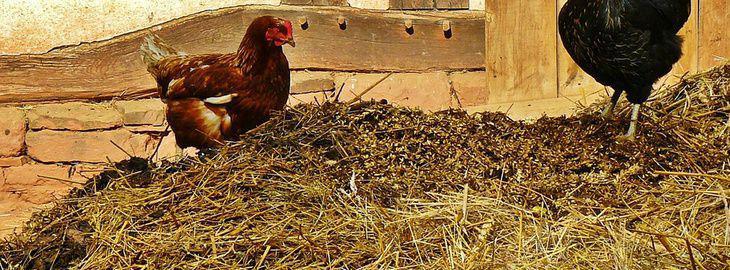 les fumiers de ferme bio: l'emploi du fumier au jardin