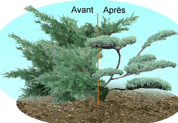 L art du niwaki comment tailler les arbres et arbustes for Taille olivier en nuage