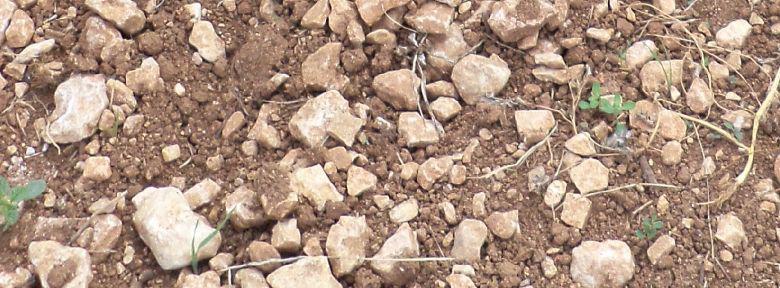 Faut-il enlever les cailloux de la terre du jardin ?