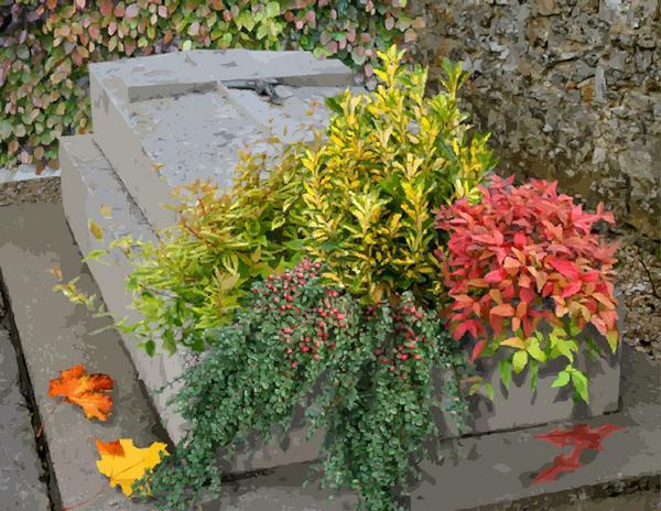 Fleurir une tombe au cimetière
