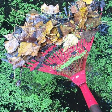 Entretien du bassin ou mare en automne for Pompe pour mare